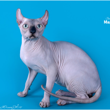 мальчик эльф/ELF MALE DIONIS- sold USA